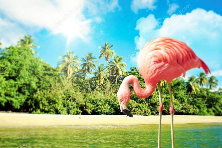 depositphotos_45112279-stock-photo-pink-flamingo-in-the-water